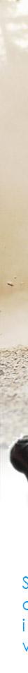 Pronájem Rally simulátoru, Půjčovna simulátoru Rally, Půjčovna závodního Rally Formule Simulátoru, Brno, Praha, Olomouc, Ostrava, Zlin XX Rally simulátor. Pronájem simulátoru autorally, Půjčovna závodního rally simulátoru, Brno, Praha, Olomouc, Ostrava, Zlin